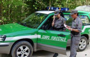 forestali cambia sede