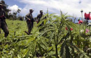 droga-colombia