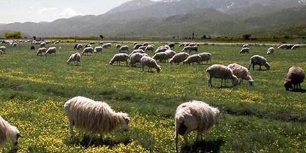 agricoltura nel decreto emergenze misure a favore della sicilia