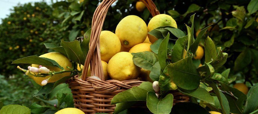 limone-siracusa