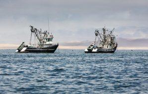 pesca-illegale